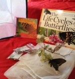Social Butterflies