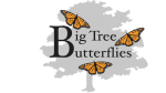 Big Tree Butterflies